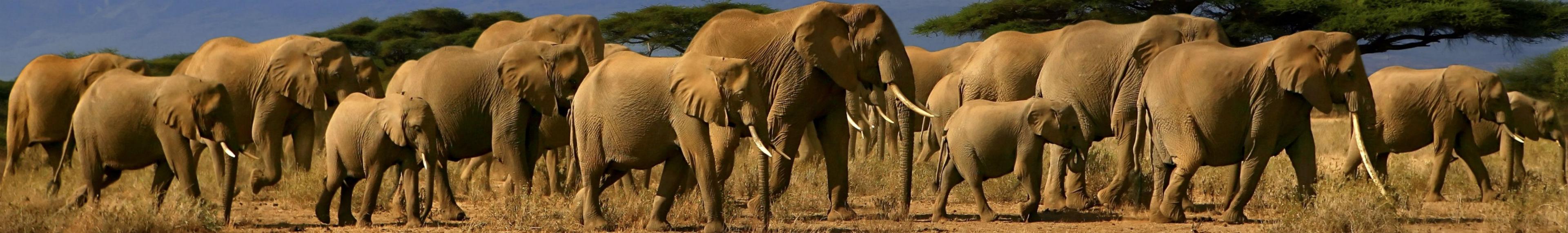 tanzania reizen tanzania safari reizen koningaapreizen naar tanzania