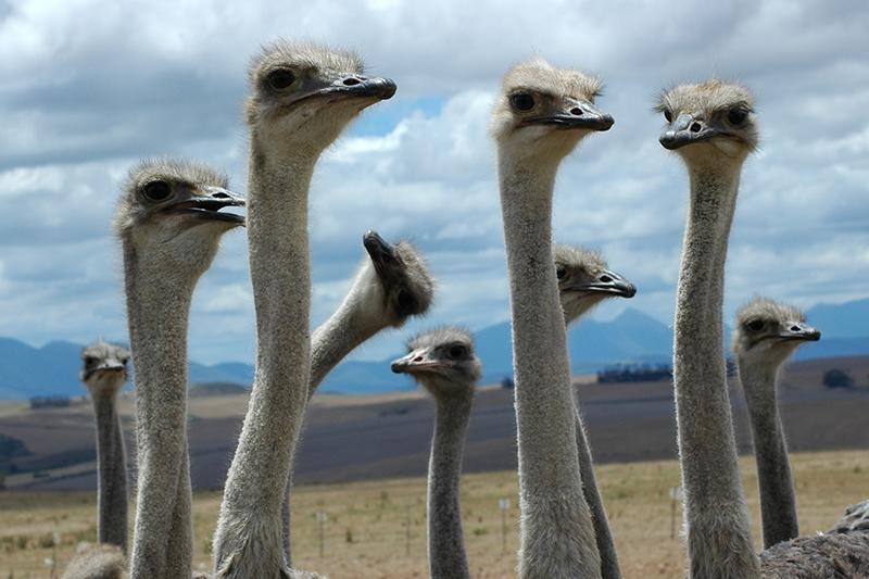 Familiereis ZUID-AFRIKA KAAPSTAD - KRUGER N.P. - 15 dagen; Van pinguïns tot de Big Five afbeelding