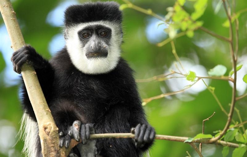Rondreis OEGANDA - Internationale Kampeerreis - 16 dagen; Gorilla's in de Parel van Afrika / Internationale Groep