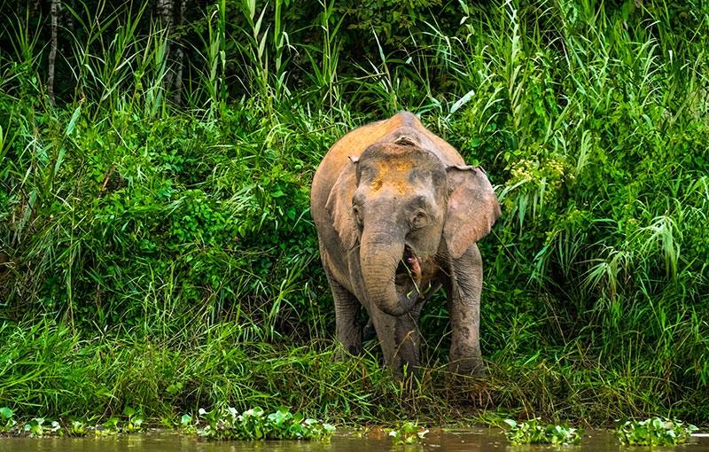 Rondreis MALEISIË BORNEO - 16 dagen; Naar het hart van Borneo afbeelding