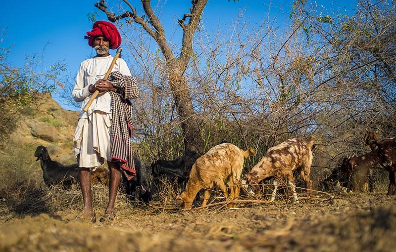 Rondreis INDIA: GUJARAT EN MUMBAI - 16 dagen; Toeristisch ongerept India
