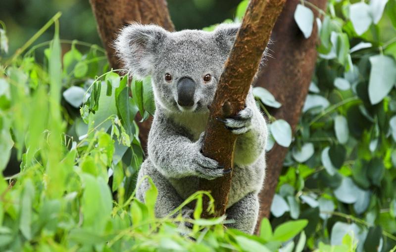 Sfeerimpressie Rondreis AUSTRALIË HOOGTEPUNTEN - 30 dagen; Land van kangoeroes en rode aarde