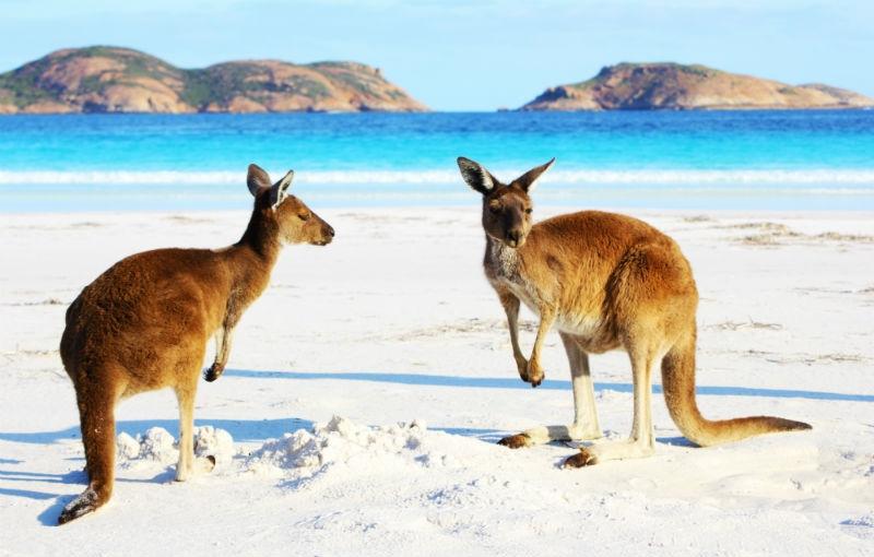 Rondreis WEST-AUSTRALIË - 24 dagen; Van Adelaide naar Broome