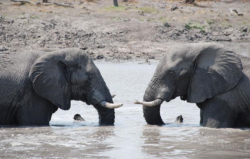 Rondreis BOTSWANA - 20 dagen; Natuur op haar best