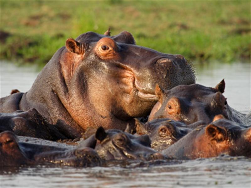 Rondreis BOTSWANA - Internationale Kampeerreis - 20 dagen; Natuur op haar best / internationale groep