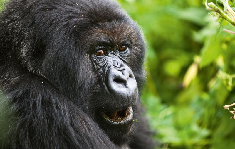 Rondreis OEGANDA, KENIA EN TANZANIA - 27 dagen; Safari rond het Victoriameer
