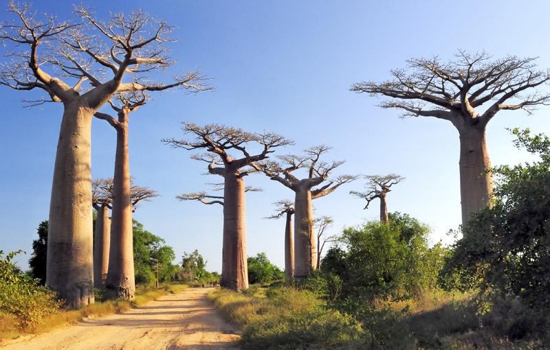 Rondreis MADAGASCAR - 30 dagen; Ringstaartmaki's en baobabs afbeelding