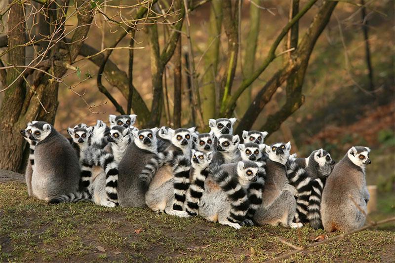 Rondreis MADAGASCAR - 17 dagen; afbeelding