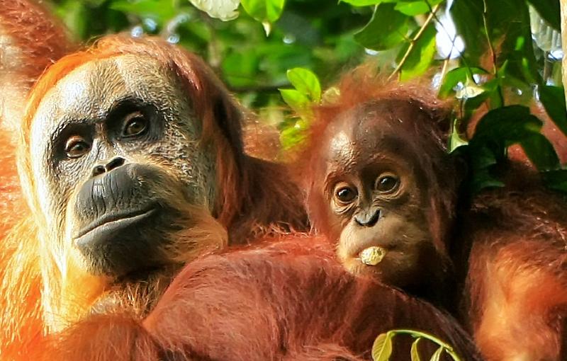 Sfeerimpressie Rondreis INDONESIË: SUMATRA, JAVA EN BALI - 22 dagen; Groene rijstterrassen en vulkanen