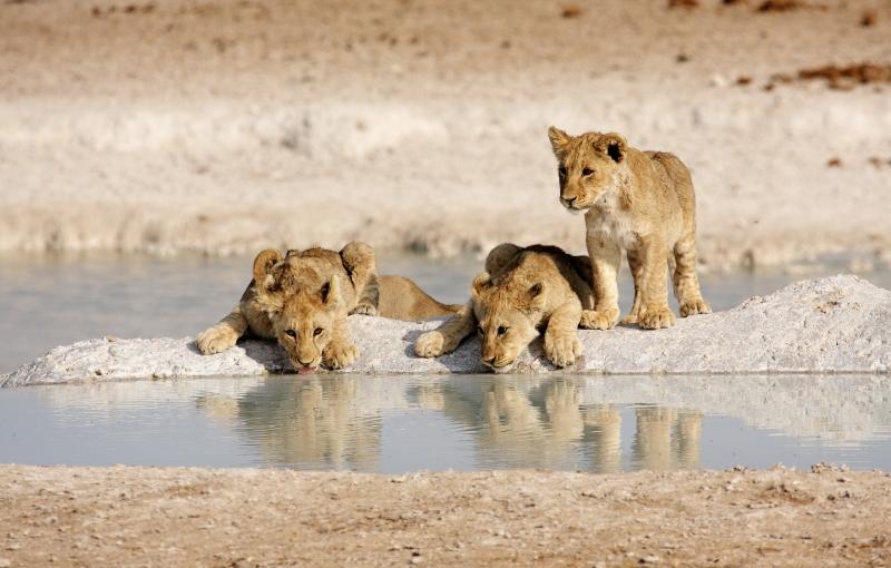 Rondreis NAMIBIË - Internationale Groepsreis - 14 dagen; Hoogtepunten van Namibië